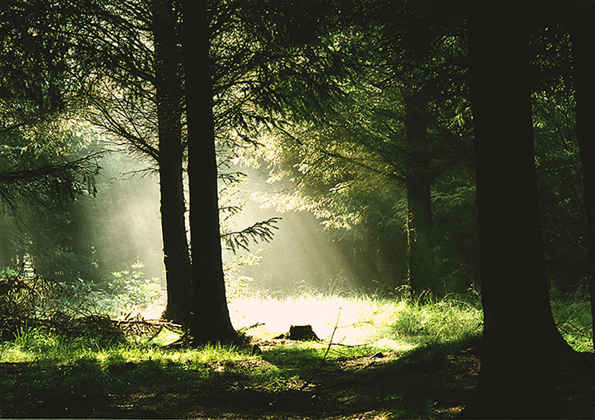 A Ray penetrates the forest